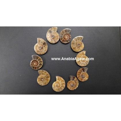 AMMONITE FOSSILS - 1.5 INCHES